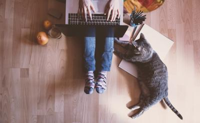 Person using laptop with cat